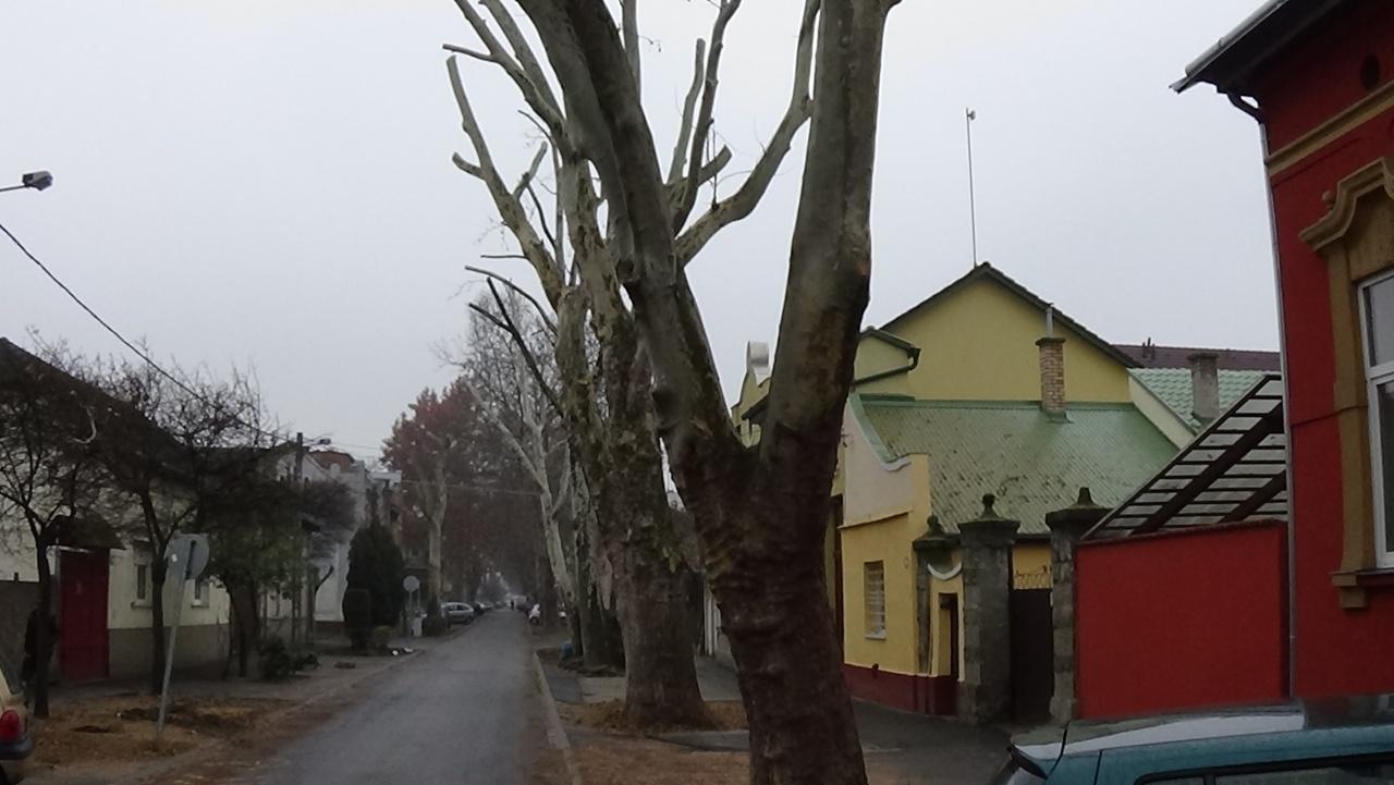 Januárban is folytatódnak a faápolási munkák a Kiss Ernő utcán