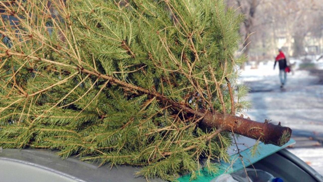 Karácsonyfáért ajándék – Értékes nyeremények a környezettudatosság jegyében