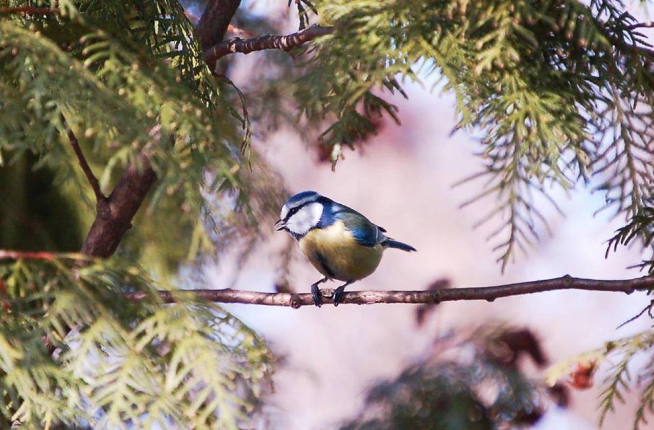 A Nyíregyházi Állatparkban is kiemelten fontos a téli madáretetés!