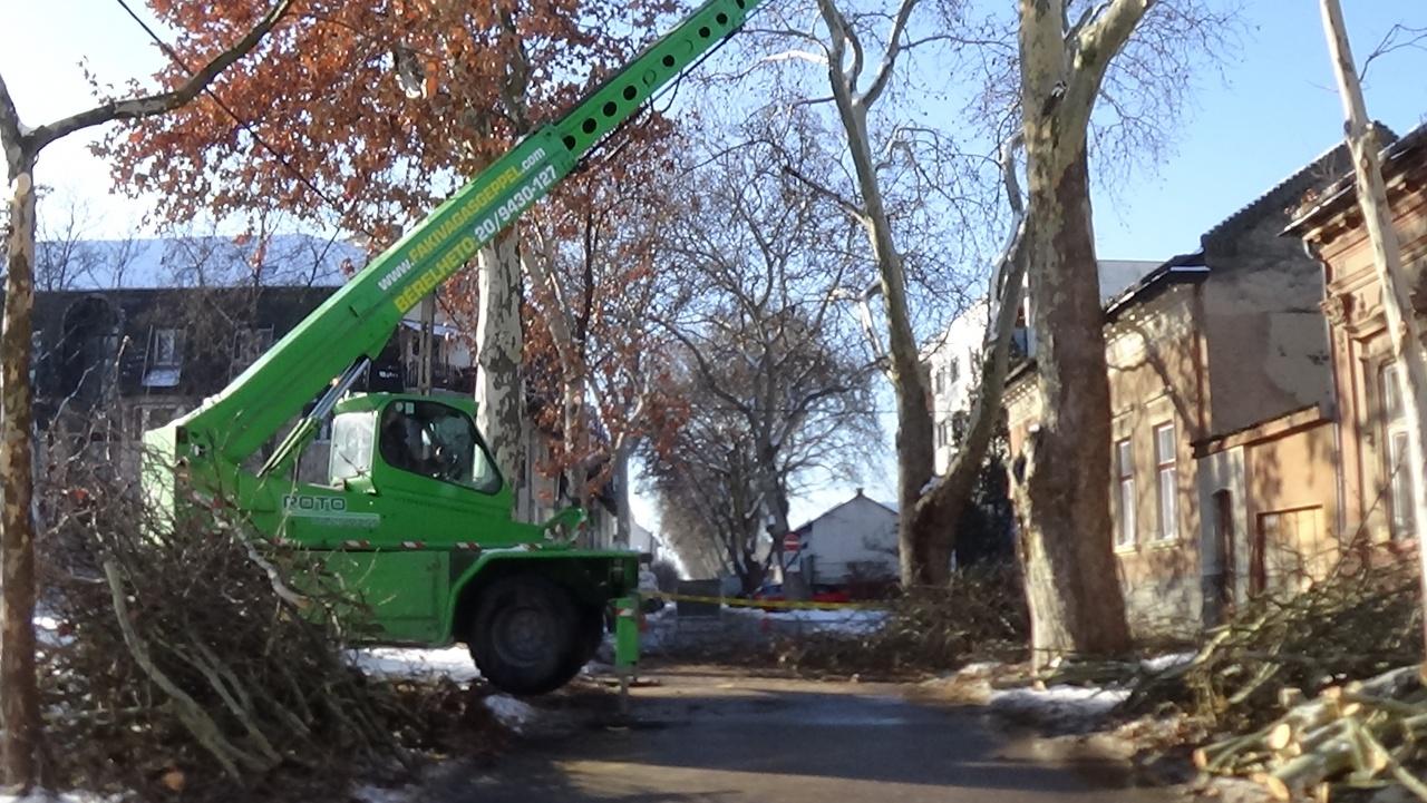 Faápolási-ifjítási munkálatokat végez a NYÍRVV a Kiss Ernő utcán