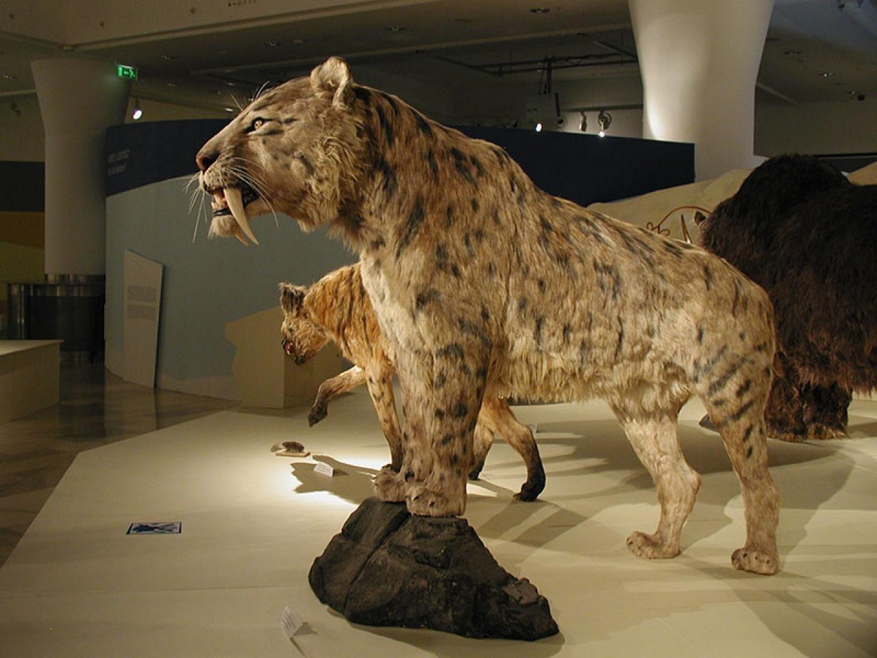 Jön a Jégkorszak! – A Magyar Természettudományi Múzeum kiállítása a Jósa András Múzeumban