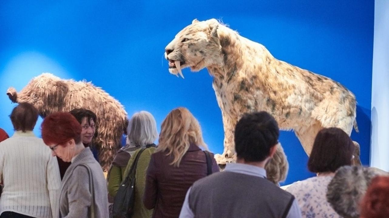 Mamutbébi és kardfogú tigris költözött a múzeumba!