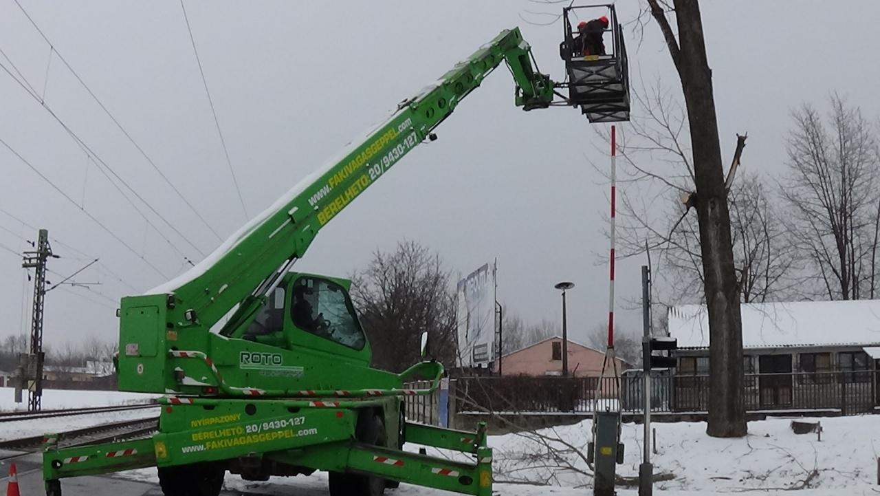Vészelyes fát vágtak ki a NYÍRVV munkatársai a Rákóczi úton található vasúti átjárónál
