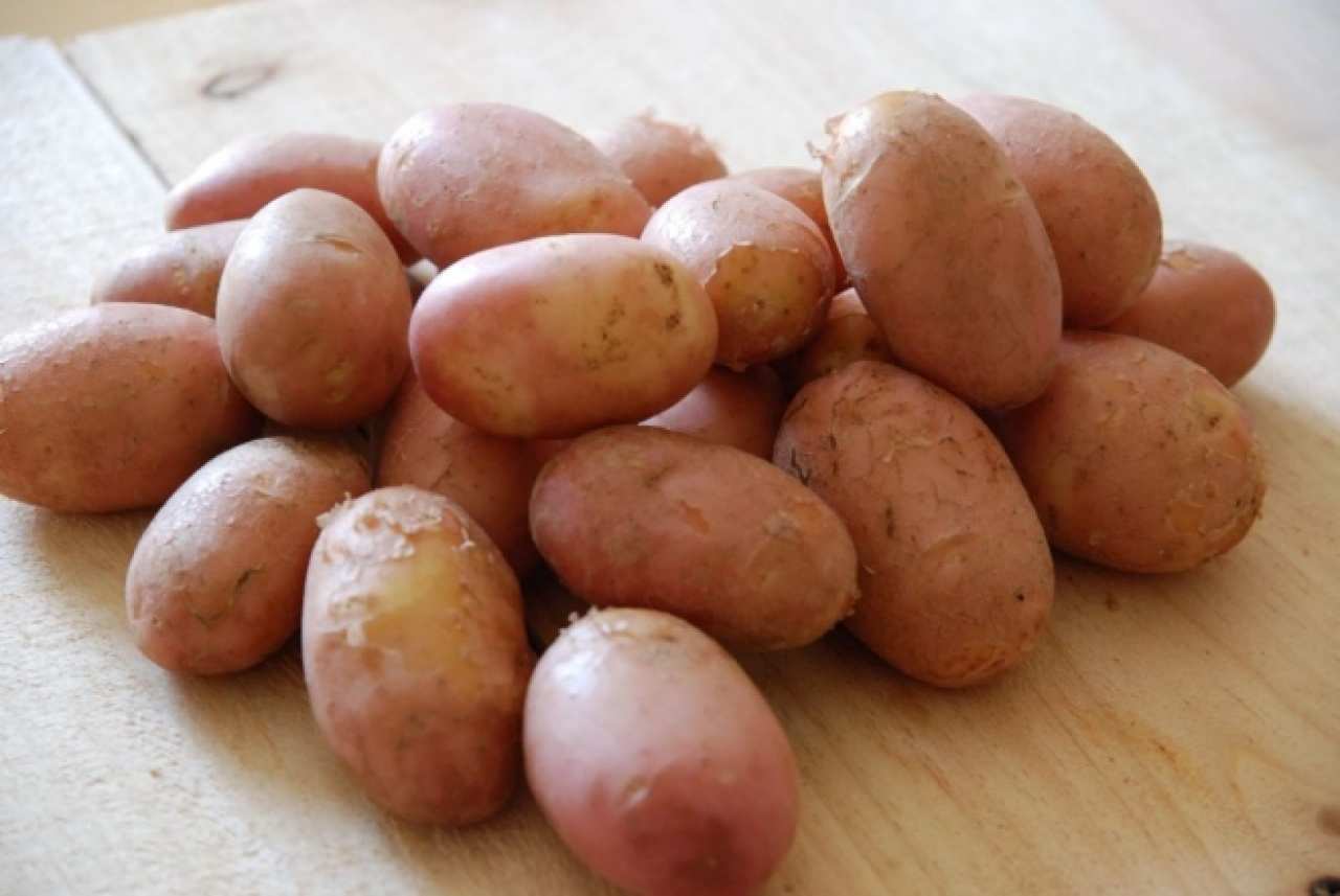 Gyakorlatilag elfogyott a magyar krumpli