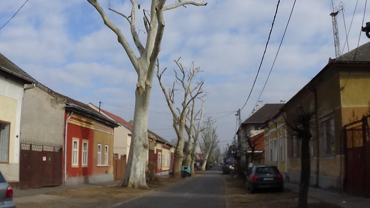Befejeződtek a faápolási munkák a Kiss Ernő utcán