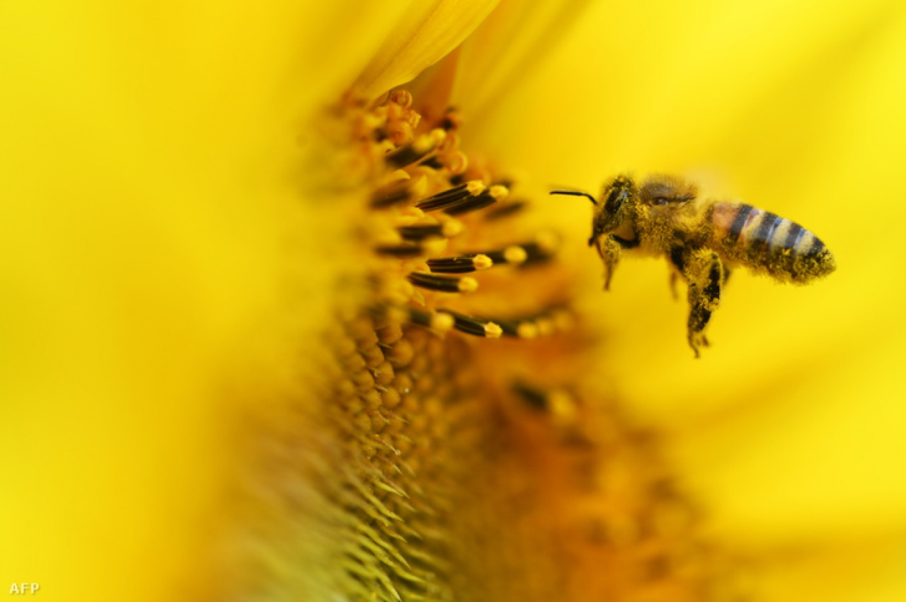 Gondolta volna? - Alapvető matematikai feladatok megoldására képesek a méhek