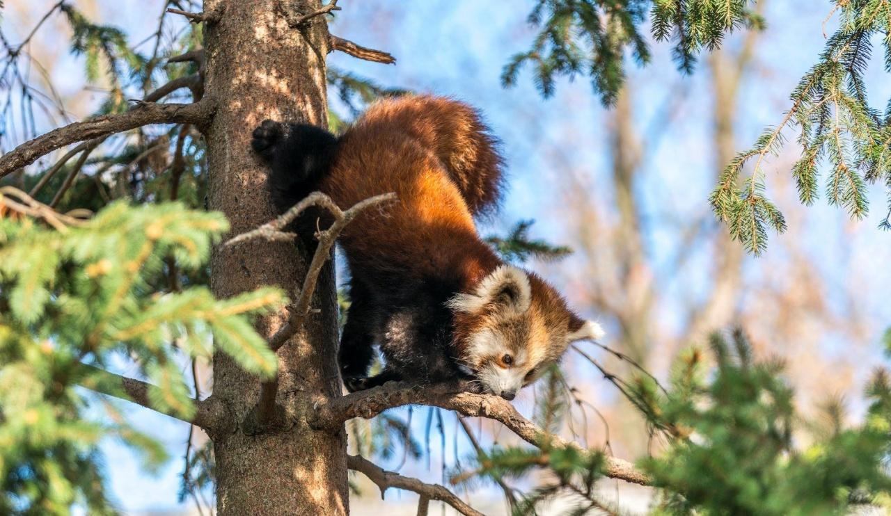 Csereprogram – Európába és Ázsiába is kerülnek állatok a Nyíregyházi Állatparkból