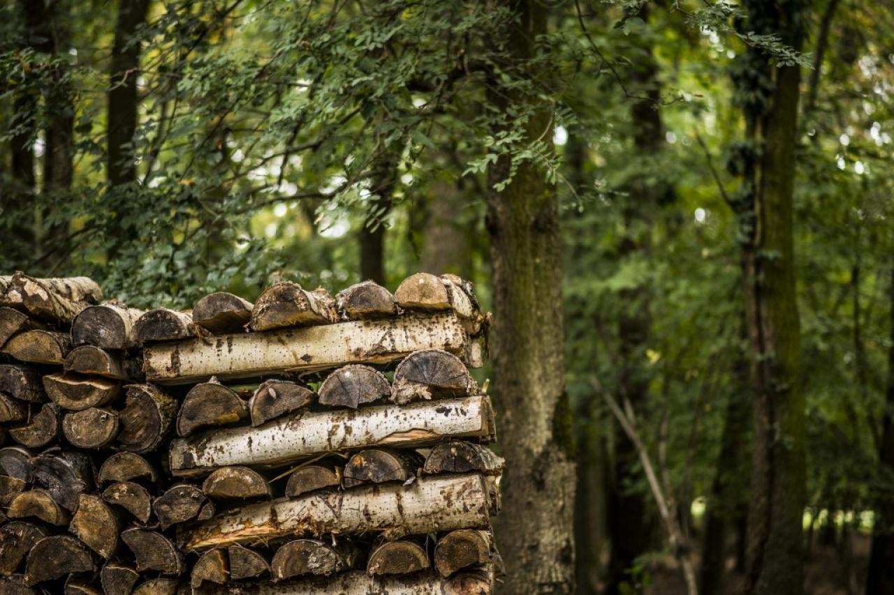 Elkezdődnek az erdősítési munkák a Sóstói-erdőben