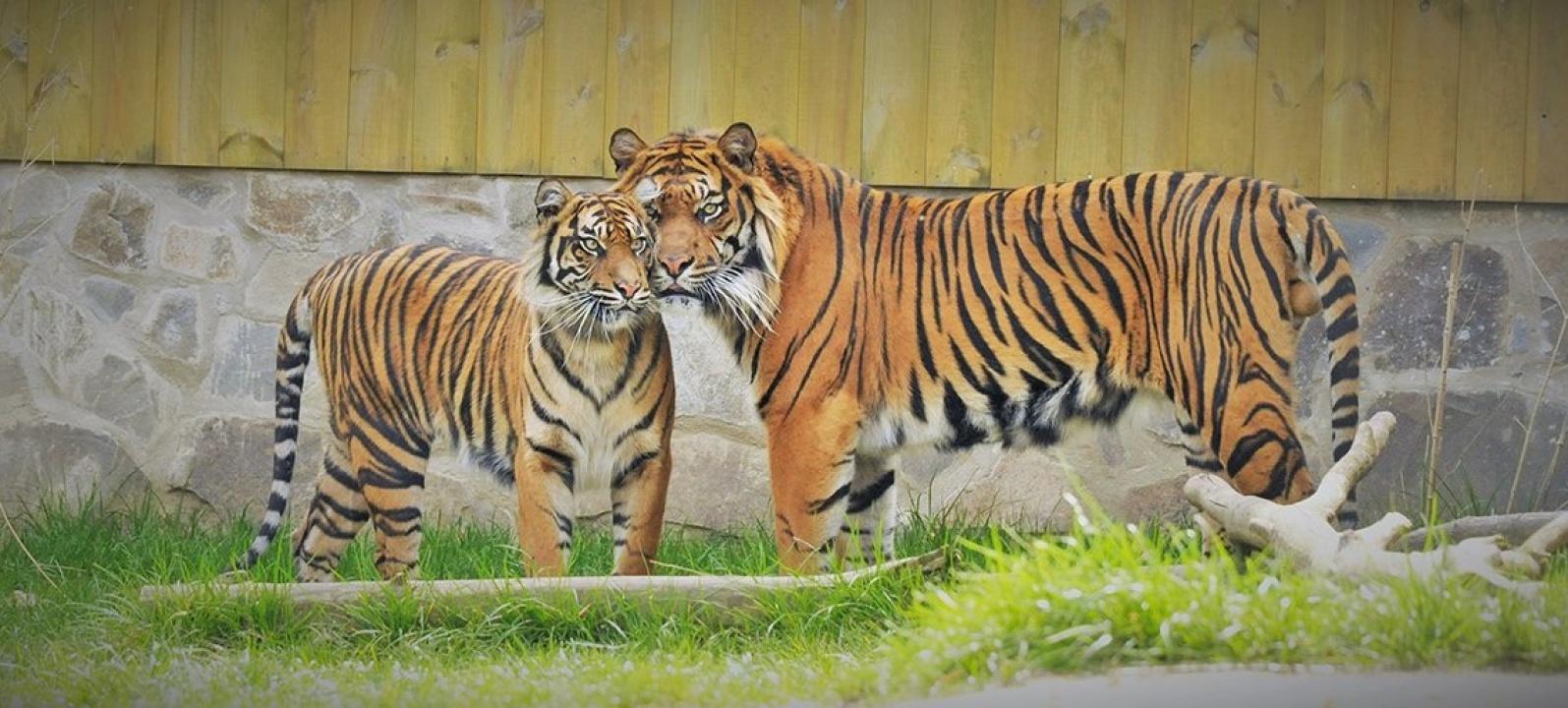 Párosan szép az élet! – Elolvadtunk a Nyíregyházi Állatpark Valentin-napi fotósorozatától