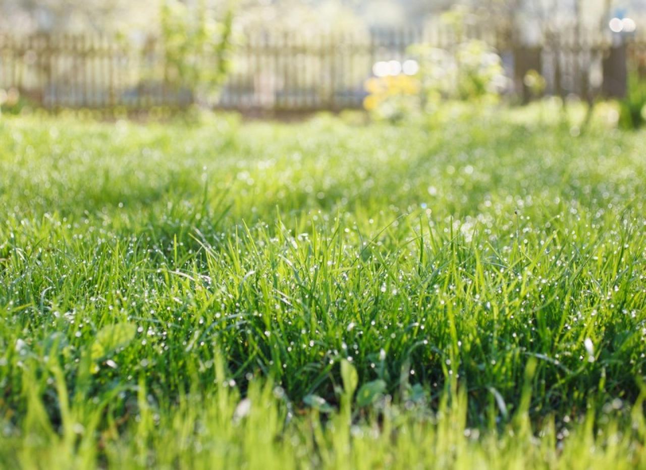 """Tovább szépül Nyíregyháza! – Indul """"A szomszéd fűje mindig zöldebb"""" projekt"""