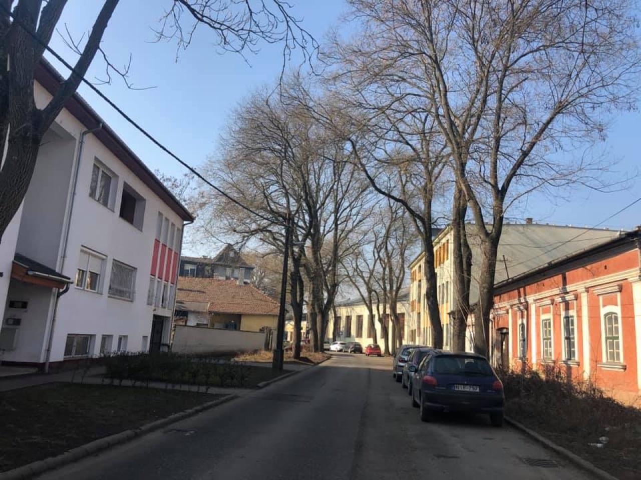 Folytatódnak a faápolási munkálatok Nyíregyházán – Az Eötvös utca következik!