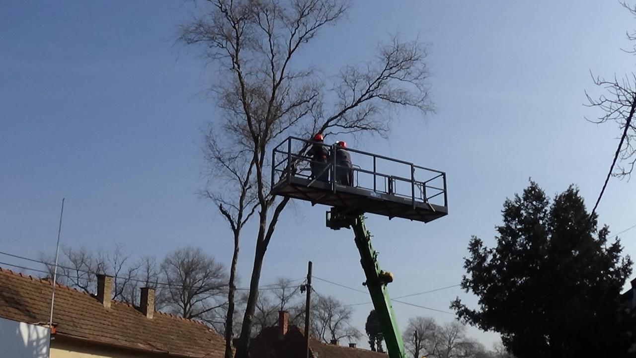 Február végéig végzik a faápolási munkálatokat a NYÍRVV munkatársai