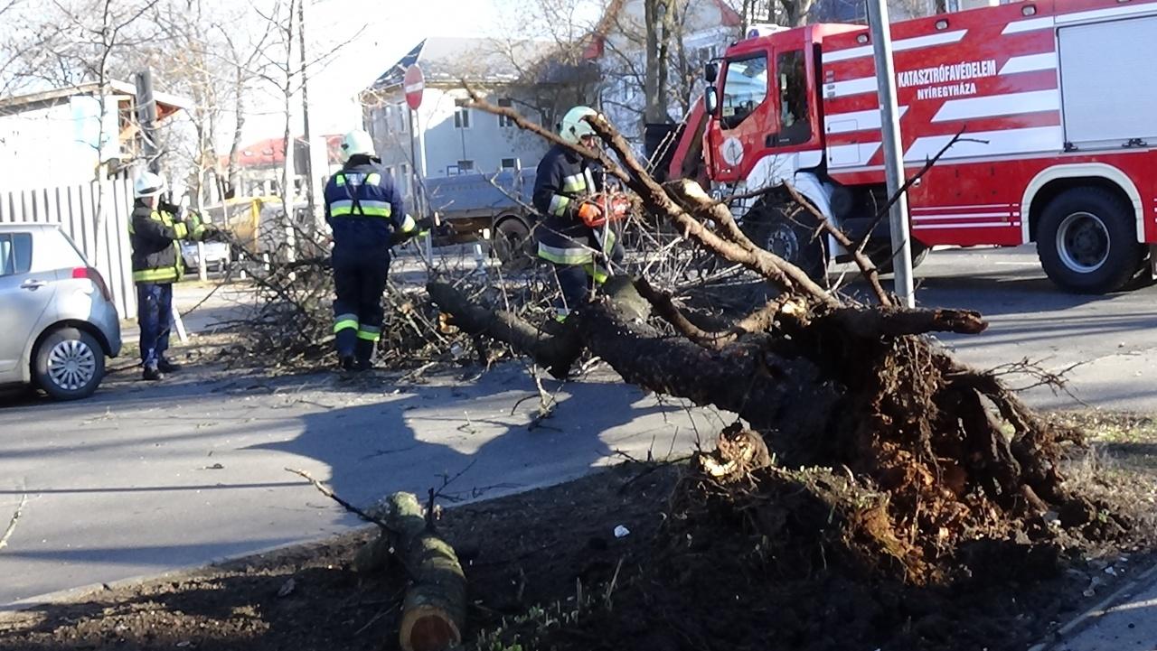 Fákat döntött a viharos szél Nyíregyházán az elmúlt hétvégén