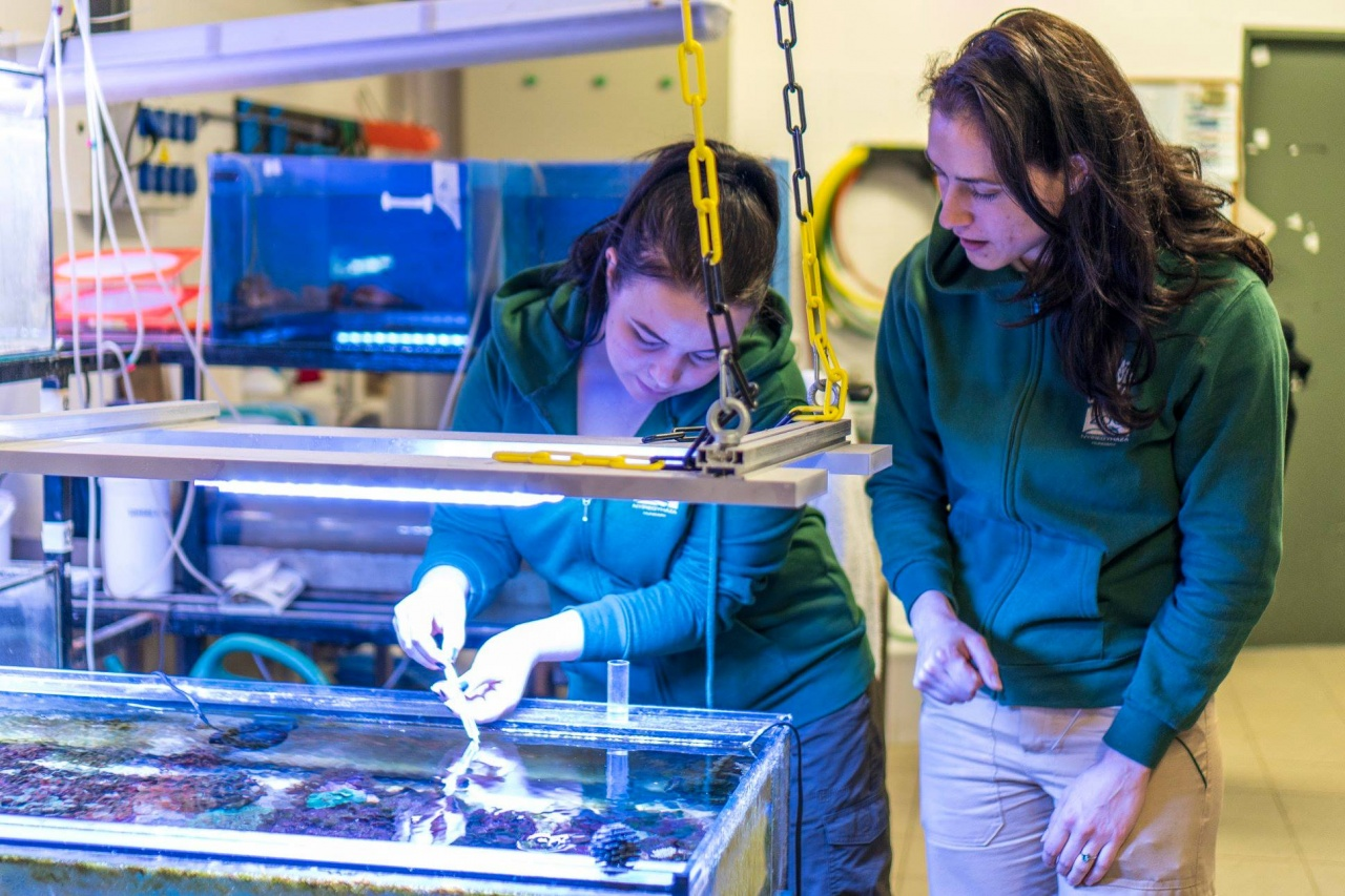 Nemzetközi oktatás – Közkedvelt gyakorlati helyszín a Nyíregyházi Állatpark