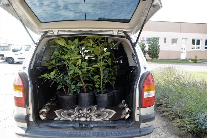 A Városszépítő program növényeinek átadása