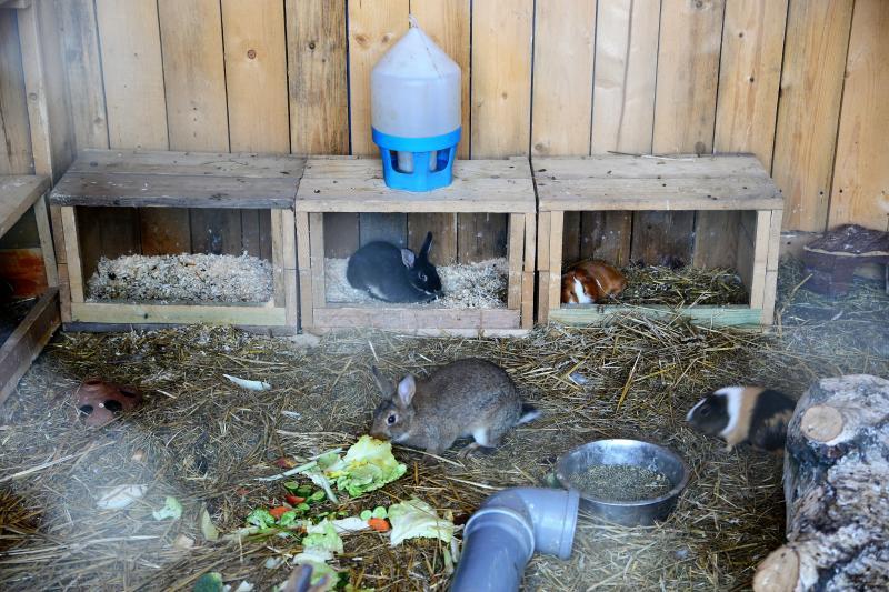 Állatsimogató és biokert átadás Sóstóhegyen