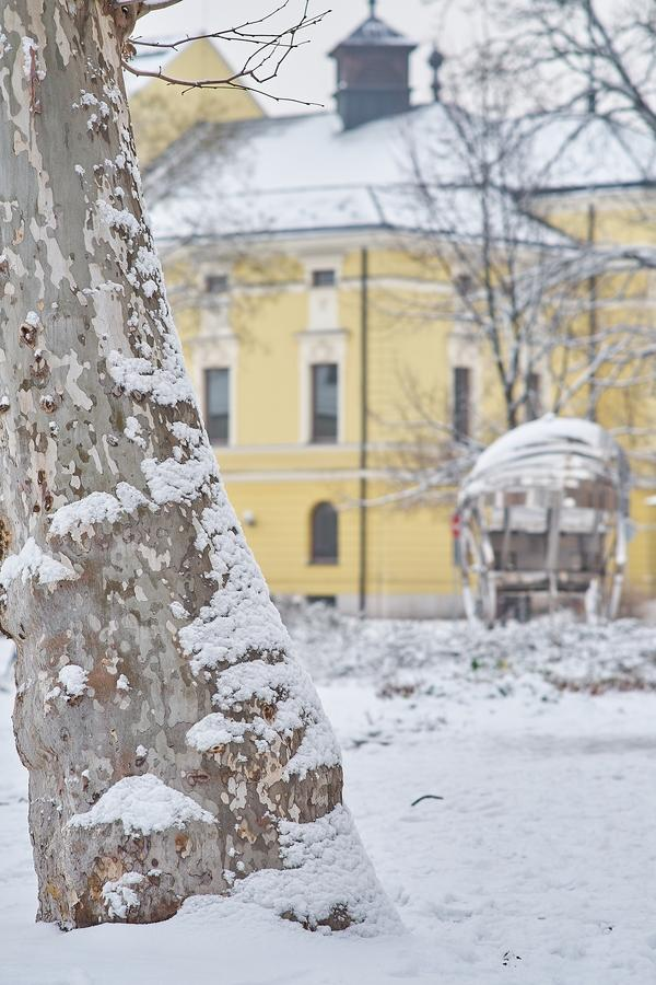 Az első hó 20210113