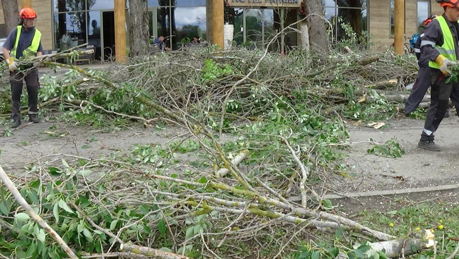 Balesetveszélyes fákat vágtak ki