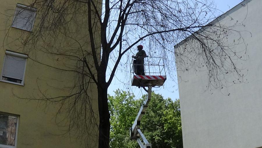 Balesetveszélyes fát vágtak ki