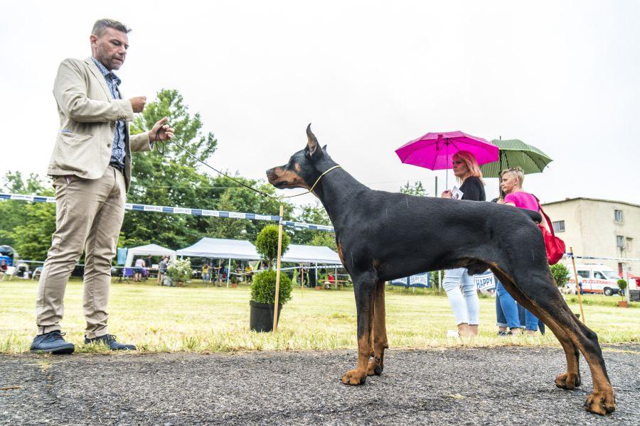 CAC Kutyakiállítás