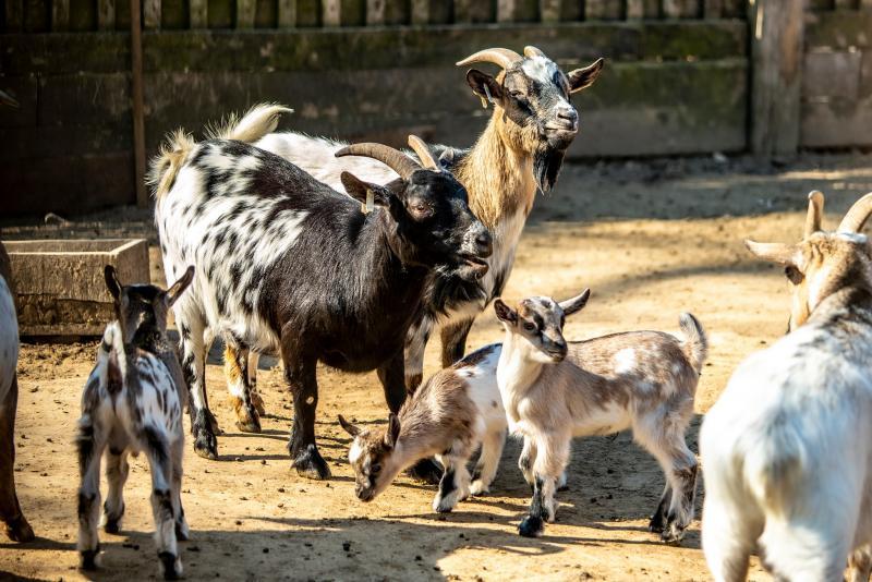 Élet a Parasztudvarban (Fotók: Nyíregyházi Állatpark)