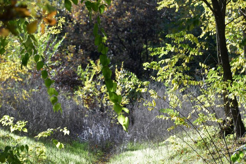 Erdei séta az őszi napsütésben