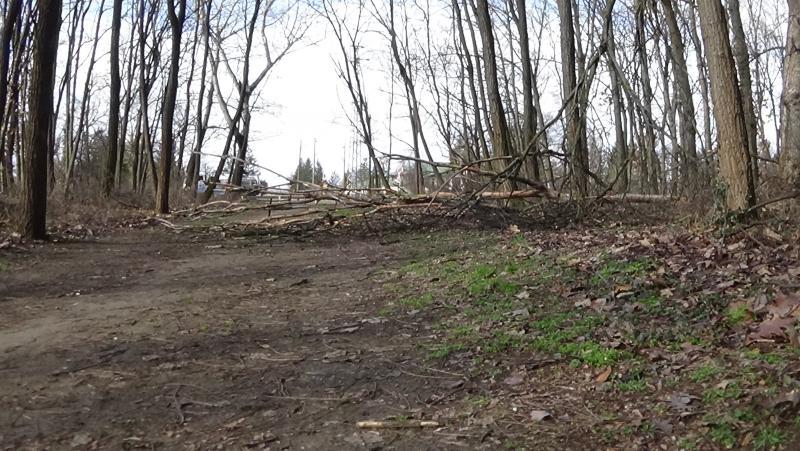 Erdei tanösvényre dőlt ki egy kiszáradt fa a Sóstói-erdőben