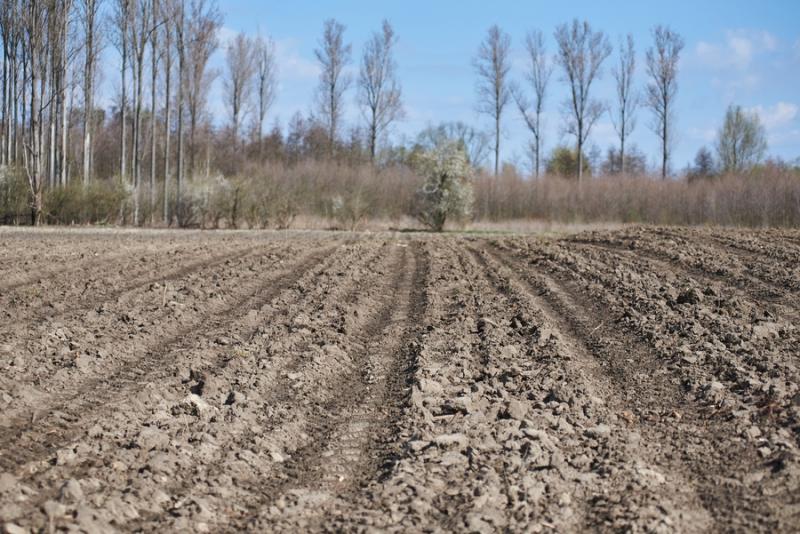 Erdőtelepítés az Ilona tanyán