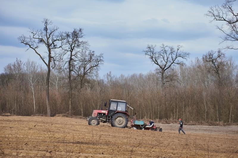 Erdőfelújítás