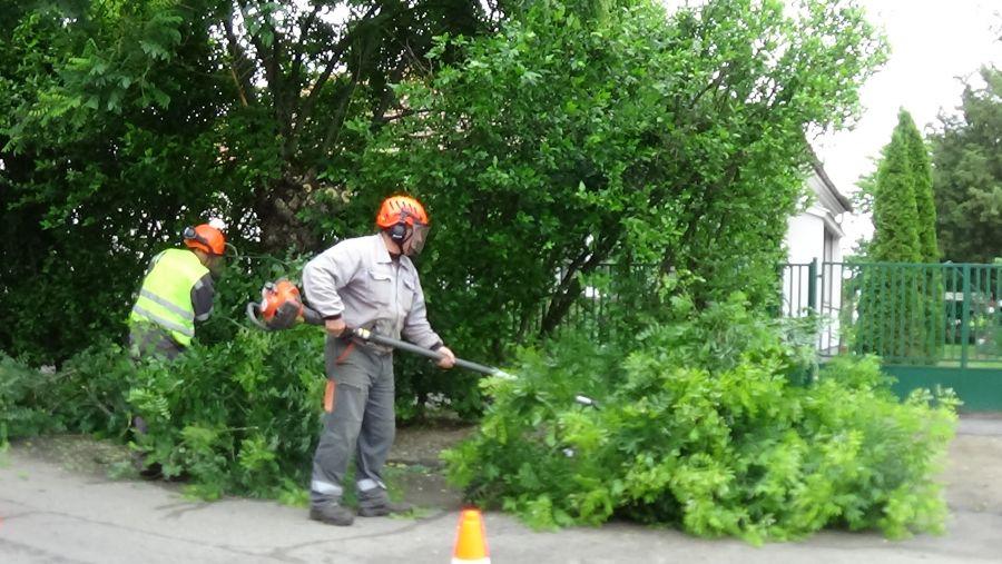 Faápolási munkálatok a Moszkva utcában