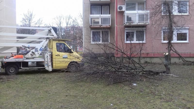 Fákat rongáltak Örökösföldön