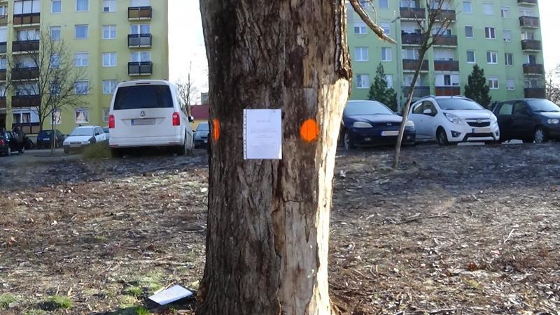 Fakivágás várható a Toldi utca 54/B. szám előtti parkoló területénél