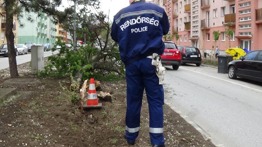 Fát törtek az Arany János utcán