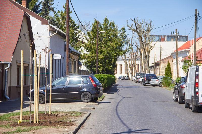 Faültetés a Szent István utcán