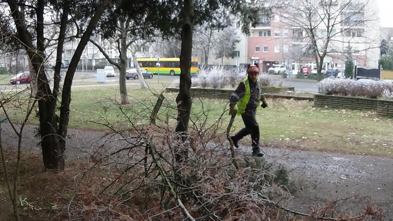 Favágási munkálatok a Kossuth utcán