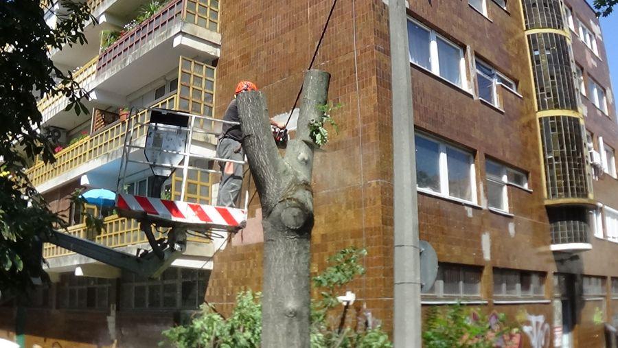 Favágási munkálatok a Kürt utcán