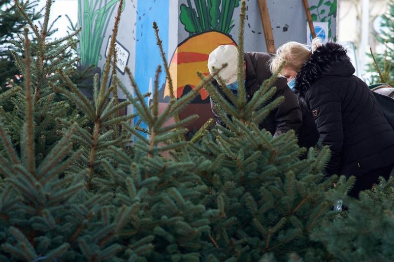 Fenyőfa vásár a Búza téri piacon