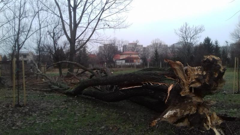 Kidőlt egy fa a Bujtosi Városligetben