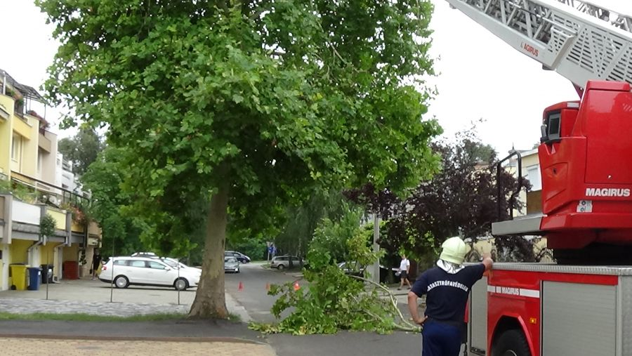 Lehasadt egy platánfa ága a Lengyel utcán