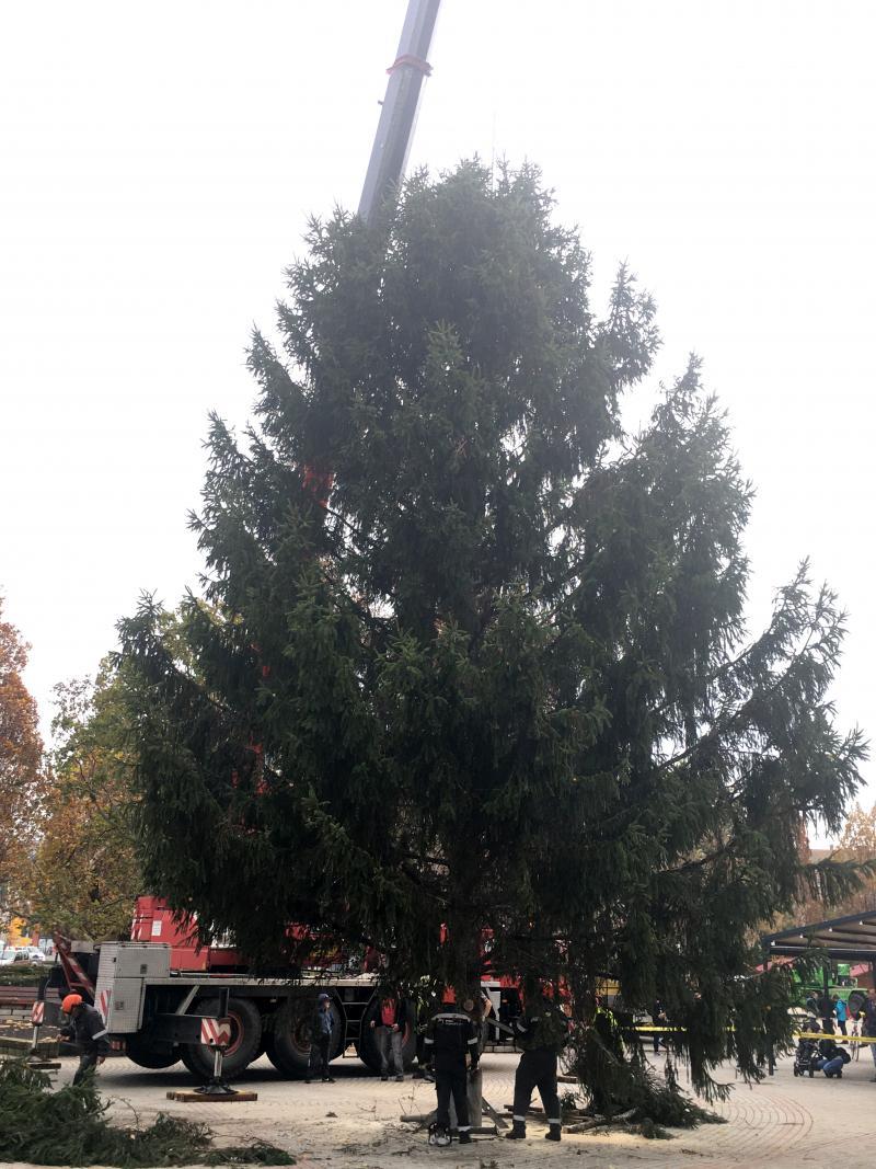 Megérkezett a város karácsonyfája - 2019