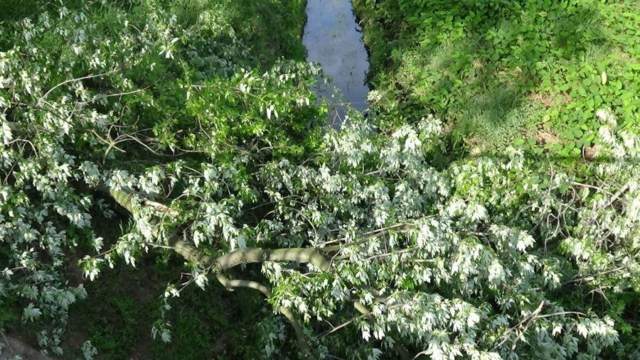 Nagy méretű faág hasadt az Ér-patak medrére