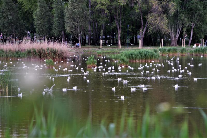 Naplemente a Bujtosi tó partján