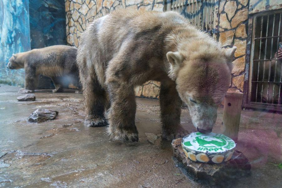 Nemzetközi Medve Nap a Nyíregyházi Állatparkban