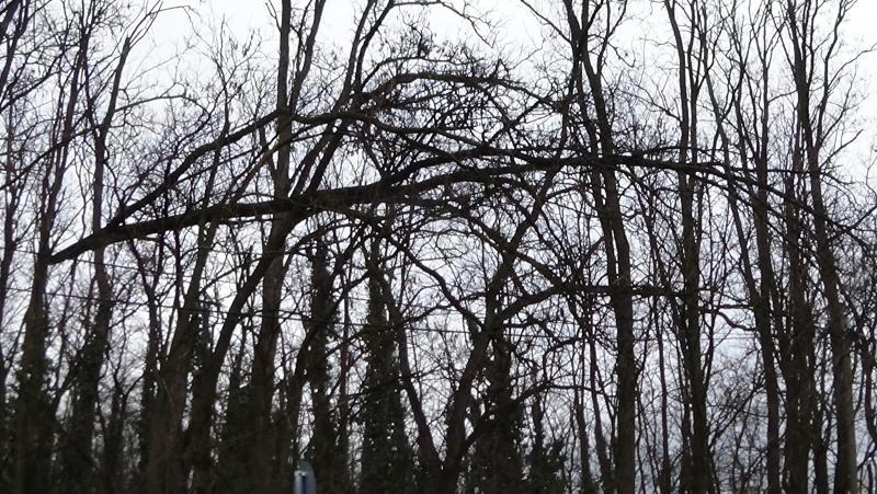 Oroson távolítottak el egy balesetveszélyes fát a NYÍRVV munkatársai