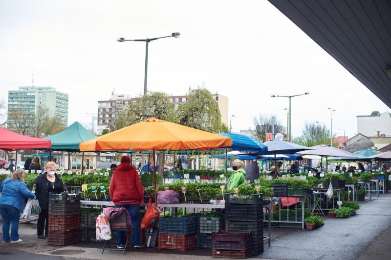 Palánta vásár a Búza téri piacon 2021 05 01