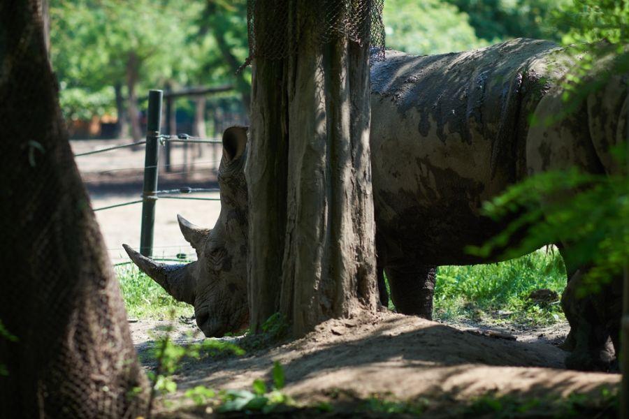 Pünkösdkor az Állatparkban