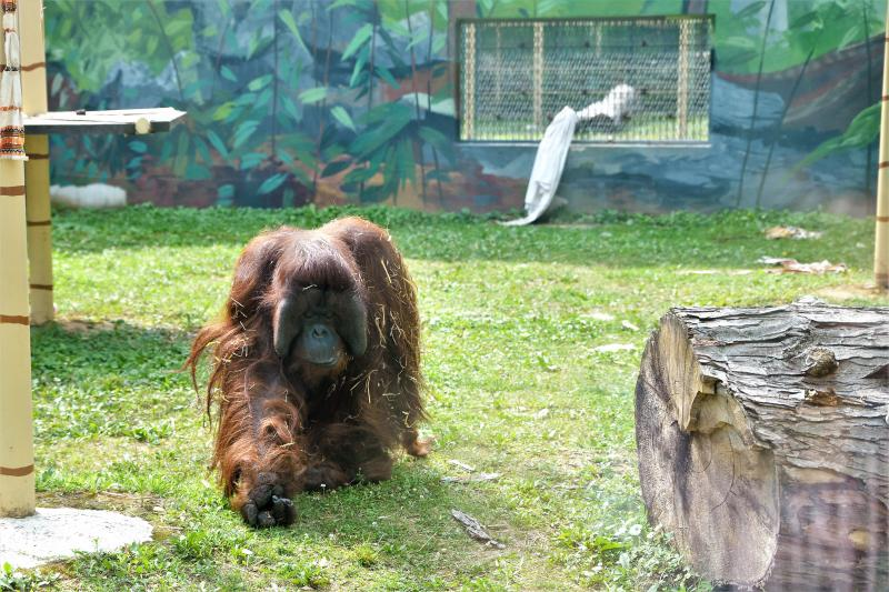 Szociális gondozók, ápolók családi napja a Nyíregyházi Állatparkban