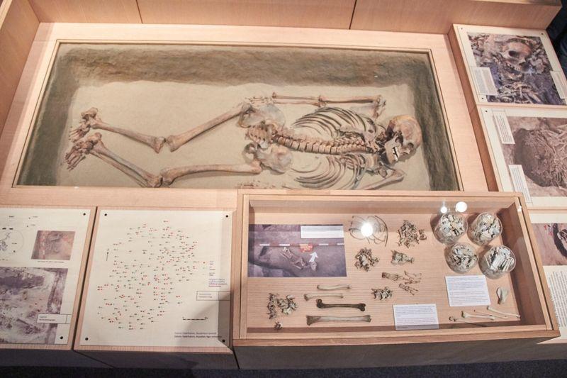 Szóra bírt csontjaink kiállítás a múzeumban