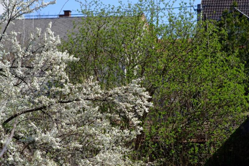 Tavasz 2021 04 05