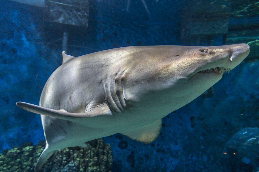 Tengerbiológusok a Nyíregyházi Állatparkban